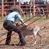BYR2016 Goats = 00308