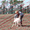 SLYR16-GoatUT-00094