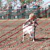 SLYR16-GoatUT-00103