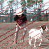 SLYR16-GoatUT-00089