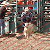 SLYR16-Sheep-00011