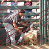 SLYR16-Sheep-00001