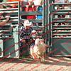 SLYR16-Sheep-00009