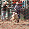 SLYR16-Sheep-00014