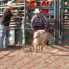 SLYR16-Sheep-00012