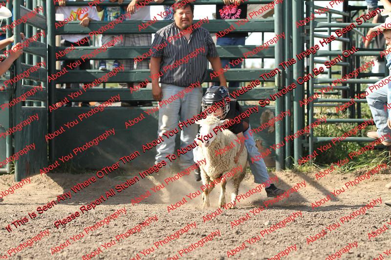 SLYR16-Sheep-00005