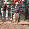SLYR16-Sheep-00013