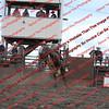 Towner 7 4 16 Performance Bulls =  00008