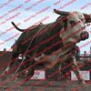 Towner 7 4 16 Performance Bulls =  00019