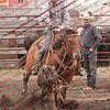 Towner 7 3 16 Calf Roping- 00011