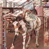Towner 7 3 16 Saddle Bronc =  00004