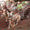 Towner 7 3 16 Saddle Bronc =  00003
