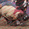 WE -- SPerf Sheep  - 00008