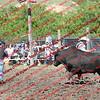 WE -- SunPerf Bull  - 00017