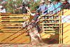 M19-FP-BULLS- 0003