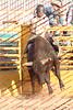 Mad17-P1-Bulls-009