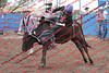 Max17 - P1 - Bulls - 014