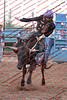 Max17 - P1 - Bulls - 012
