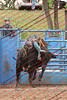 Max17 - P2 - Bulls - 066