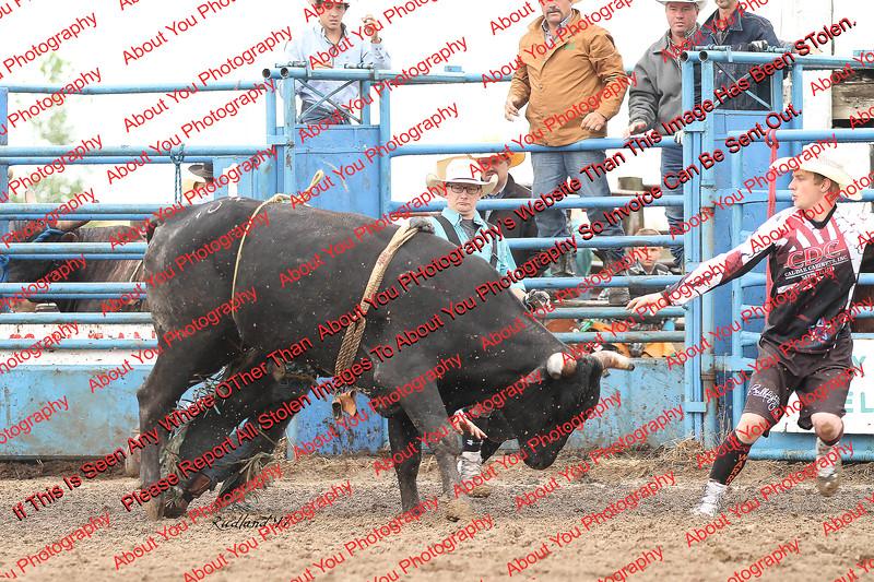 Max17 - P2 - Bulls - 055