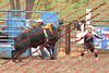 Max17 - P2 - Bulls - 070