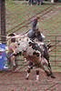 Max17 - P2 - Bulls - 018