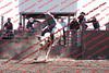 Towner 17 Perf 2 - Bulls - 0001
