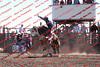 Towner 17 Perf 2 - Bulls - 0015