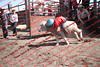 Towner 17 Perf 2 - Sheep - 00027