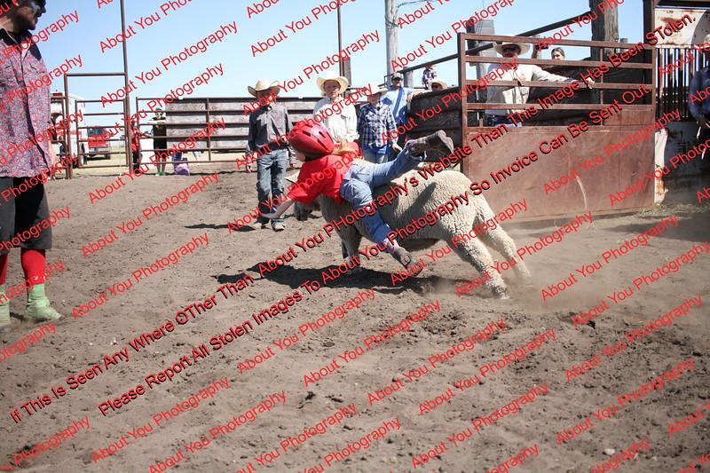 Towner 17 Perf 2 - Sheep - 00021