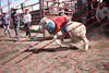 Towner 17 Perf 2 - Sheep - 00028