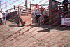 Towner 17 Perf 2 - Sheep - 00013