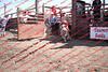 Towner 17 Perf 2 - Sheep - 00015
