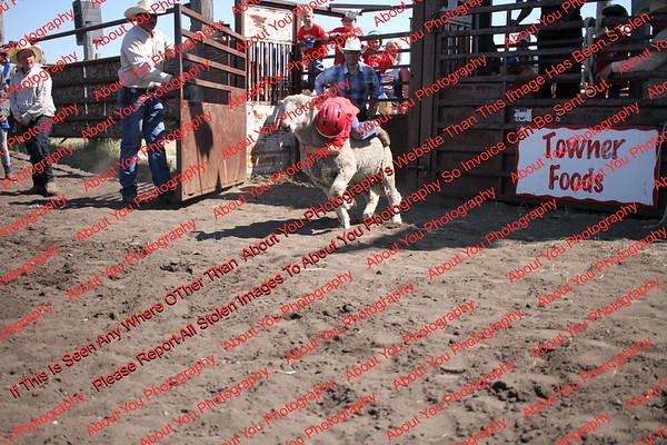 Towner 17 Perf 2 - Sheep - 00001
