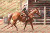 WEVQ Horse - 00019