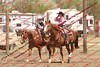 WEVQ Horse - 00002