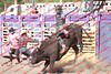 WE Sun Perf Bulls - 0144