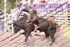 WE Sun Perf Bulls - 0146