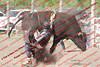 WE Sun Perf Bulls - 0150