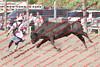 WE Sun Perf Bulls - 0132