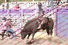 WE Sun Perf Bulls - 0143