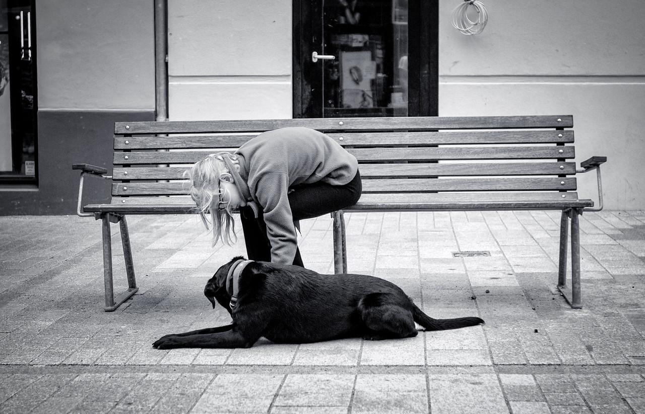 Menneskets beste venn