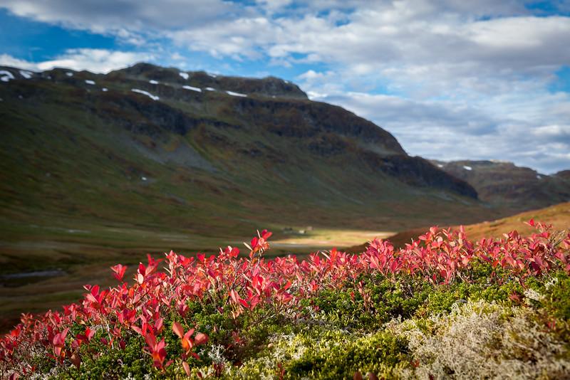 Høst i fjellet