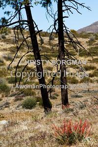 San Bernadino Forest