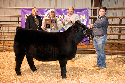 7.	Chance Sweeten of Ardmore, Dickson FFA, Grand Champion Supreme Heifer