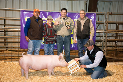 Kohl Robertson, Breed Champion York and Bronze Champion