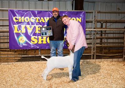 Braden Allen of Silo, Reserve Grand Champion Goat, Division Champion