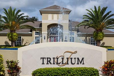 Trillium Stock-575