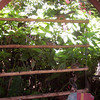 I had this created by one of the workers where I used to live - BB.  This design can have multi-purposes!  I used it as a bird/squirrel feeder (hours of entertainment!).<br /> <br /> OR, You can grow herbs, lettuce, flowers & all sorts of stuff (all depending on how big the bamboo is).<br /> <br /> You can also get vine-y things like beans which will also create a privacy barrier!!<br /> <br /> Another trick I learned is instead of putting rocks at the bottom of the dirt (to help with drainage), break up a bunch of styrofoam things (to-go boxes, coffee cups+)!! (best not to do it with food related things if you're concerned with being organic, etc.)<br /> <br /> You can hang this from a roof or ceiling or hang it from a wall.  If you drill holes in the bottom for drainage, you'll need to put it outside.  If not, you can put this inside.