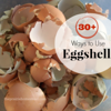"<a href=""http://www.theprairiehomestead.com/2012/08/9-things-to-do-with-eggshells.html"">http://www.theprairiehomestead.com/2012/08/9-things-to-do-with-eggshells.html</a><br /> <br /> To the majority of people, eggshells are simply trash.<br /> <br /> But to homesteader, eggshells are a surprisingly useful resource. You know what they say… ""Waste not, want not.""<br /> <br /> I personally get a big kick out of finding uses for things people normally throw away. So, I've put together a list of 9 Things You Can Do with Eggshells around your own homestead.<br /> <br /> (Holy Moly! My list started out with a measly 9 ideas, but after all of my thrifty readers left their ideas in the comment section, it has grown to 30+! I've edited the list with these new additions- keep them coming folks!)<br /> <br />     **It is very important to only use eggshells from healthy, natural chickens if you or your animals are going to ingest the shells. Eggs from factory farms are not only less nutritious, but can also carry harmful pathogens. I personally have no problem eating raw eggs from my own free-range hens, but I wouldn't do so with eggs from the store.**<br /> <br /> 1. Feed them to your chickens.<br /> <br /> Boost your flock's calcium intake by crushing the shells and feeding them back to your hens. My girls much prefer crushed egg shells over the oyster shell supplement from the feed store. I wrote a post a while back that has all the details of collecting, crushing, and feeding the shells.<br /> 2. Use the shell's membrane as an all-natural bandage.<br /> <br /> I just discovered this idea, so I have yet to try it, but what a cool concept! The membrane of the shell is reported to help promote healing in cuts and scratches. This post should be able to answer most of your questions about using membranes as a first-aid tool.<br /> 3. Boil the shells in your coffee.<br /> <br /> My first thought when I read this idea was ""Why on earth would you do that?"" But apparently, people have been boiling eggshells in their coffe for centuries to help clarify the grounds and reduce bitterness. I have yet to give this a try myself, but it might be worth a try. Here is a Boiled Eggshell Coffee tutorial.<br /> 4. Sprinkle the shells around your garden to deter pests.<br /> <br /> Soft-bodied critters like slugs or snails don't like crawling over sharp pieces of shell.<br /> 5. Give your tomatoes a calcium boost.<br /> <br /> Blossom-end rot is a common tomato problem, but I recently learned that it is actually caused by a calcium deficiency in the plant. Experienced gardeners often place eggshells in the bottom of the hole when transplanting their tomato plants to help combat this problem. I'm definitely trying this next year! For more natural gardening tips, grab a copy of my latest eBook, Natural Homestead. It has dozens of recipes to keep your garden chemical-free.<br /> 6. Eat them.<br /> <br /> Yeah, I know. First I told you to eat your weeds, and now I'm saying to eat eggshells… Hey, I never claimed to be normal. ;)<br /> <br /> But yes, many folks actually do eat eggshells for their awesome amounts of calcium.  I've never actually tried it, but I know that several of my readers have. This post will give you all the info you need to make your own calcium-rich eggshell powder.<br /> 7. Use them to start seedlings.<br /> <br /> If homemade paper pots aren't your style, give some of your smaller seedlings a start in rinsed-out shells. This post from Apartment Therapy will give you all the info and photos you need to get you started.<br /> 8. Toss them in the compost pile.<br /> <br /> Add calcium to your compost by adding shells to your pile or tumbler.<br /> 9. Sow directly into the soil.<br /> <br /> If none of the previous idea sound appealing and you don't have a compost pile, then you can simply turn crushed shells directly into your garden patch. It's still better than sending them to the garbage.<br /> All of the following ideas were submitted by readers of The Prairie Homestead:<br /> <br /> 10. Potting Soil Addition: Used coffee grounds and egg shells are wonderful in potted plants. I use a 1:4 ratio. (From Tala)<br /> <br /> 11. Blade Sharpening: Keep them in the freezer and use to clean and sharpen blender blades by adding water. Then pour the mixture into your compost bin. (From Greenie and Ceridwyn)<br /> <br /> 12. Canine Remedy: I save mine and let them dry out, when I have a good size amount I crush them, then use a coffee grinder and make them into a powder. If one of my dogs get diarrhea, I just sprinkle a couple teaspoons of the powder on their food for a day and the diarrhea goes away. (From Terri)<br /> <br /> 13. Calcium Pills: I save my eggshells in a large bowl, then I steam them to sanitize them and let them dry. Then I grind them down (I use a vitamix but I think any blender would do if you crush them a little first, or just do it in a coffee grinder) into a fine powder and spoon them into 00 gelatin capsules for homemade calcium pills. (From Mari)<br /> <br /> 14. Mineral supplement: I sometimes soak egg shells in lemon water for a few weeks in the fridge. Then I add a tiny bit to my shakes to get extra minerals. (From Jill)<br /> <br /> 15. Tooth Remineralizing: Natural News.com has an article about using comfrey root & fresh egg shell (organic & pasture raised) for re-mineralizing your teeth.  Not sure about this particular method, but it would make sense due to the healing properties of the comfrey AND the minerals in the egg shell.  (From Jennifer)<br /> <br /> 16. Sidewalk chalk: 5-8 egg shells (finely ground), 1 tsp hot water, 1 tsp flour, food coloring optional…mix and pack into toilet tissue rolls and let dry. (From Linda) <br /> <br /> 17. First Aid Treatment: Fresh egg membranes applied, then allowed to dry, will ""draw"" minor infections: splinter, pimple, boil, etc. (From Anne)<br /> <br /> 18. Making Water Kefir: You can also use egg shell to nourish your water kefir grains.  You just add 1/4 of a clean egg shell to your water kefir while it's brewing.  We've done this instead of buying mineral drops and it seems to work great. (From Jenna, Sherry, and Tiffani)<br /> <br /> 19. Christmas Ornaments: When I found a large cache of slightly-flawed plastic suncatcher ornaments to paint cheap at the local flea market a few years ago, I snatched a big bunch of them up.  I mixed regular acrylic colors with Elmer's glue and various ""texturizing"" elements to pack those suncatchers with.  I tried everything from small seeds and spices, to sifted sand, and my favorite turned out to be crushed egg shells.  They were no longer transparent, but the flaws were covered, and they make very nice Christmas tree ornaments, wall hangings, mobiles, etc.  (From Sweetp)<br /> <br /> 20. Make Calcium Citrate: Make your own calcium citrate using only fresh farm raised, preferably organic, egg shells.  Rinse residual egg out of the shells and air dry. Crush the shell and add 1t. lemon juice per egg shell and cover.  The lemon juice will dissolve the shell and there you have it… calcium citrate. (From Mary Anne)<br /> <br /> 21. Calcium-Rich Vinegar: I was taught by my herbalist teacher to make a calcium rich vinegar by adding calcium rich herbs (nettles, dock, etc) and one clean high quality eggshell to apple cider vinegar.  It needs to infuse for at least six weeks, then be decanted.  But the calcium from the shell and the plants goes into the vinegar and can be used as regular vinegar would be in salad dressing, over cooked greens, etc.  (From Sara)<br /> <br /> 22. Pan Scrubber: Crushed egg shells work great to scrub pans that have food stuck in them. Yes they will break up, but they still do the job! (From Rose)<br /> <br /> 23. Ice Cream Addition (?): I was told companies put egg shell powder in cheap ice cream to add extra calcium.  I imagine you could do this when making homemade ice cream as well. (From Brenda)<br /> <br /> 24. Cosmestic Booster: Make it into a powder and add a little bit to your nail polish to strengthen nails. Take that same powder and put it into ice cube trays with water and rub it on your face– it helps reduce the look of wrinkles. Put the powder in your lotion– it softens your hands. (From Amy)<br /> <br /> 25. Add to Broth/Stocks: For extra calcium and minerals. (From Becky and Tiffani) (Get my homemade stock/broth tutorial here.)<br /> <br /> 26. Arts and Crafts: Use to make mosaics or mixed-media art projects. (From Carol and Janet)<br /> <br /> 27. House Plant Booster: ""My Grandmother kept eggshells covered with water in a mason jar which she used to water her African violets. She had the most magnificent plants imaginable!"" (From Cynthia)<br /> <br /> 28. Wild Bird Treat: You can also feed them to the birds. They're high in calcium and are great for birds in the spring when they are laying eggs– just make sure to sterilize them. Bake them in the oven for 20 minutes at 250 F and crush them. (From Susanne)<br /> <br /> 29. Laundry Whitener: To help your whites not to turn greyish, put a handful of clean and broken down eggshells and 2 slices of lemon in a little cheesecloth bag with your clothes in the washer. It will prevent the soap deposit that turns the white clothes grey. (From Emilie)<br /> <br /> 30. Garbage Disposal Cleaner: Toss a few shells down your disposal to help freshen things up. (From Carol) (Okay– since originally posting this, I've had several folks say this is a bad idea and that it will clog your drain– so proceed with caution…)<br /> - See more at: <a href=""http://www.theprairiehomestead.com/2012/08/9-things-to-do-with-eggshells.html#sthash.RsBR9jK3.dpuf"">http://www.theprairiehomestead.com/2012/08/9-things-to-do-with-eggshells.html#sthash.RsBR9jK3.dpuf</a>"